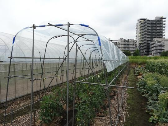 最後に農業用ビニールを張って完成しました。