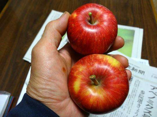 真っ赤な夏りんごシナノレッドの写真です。