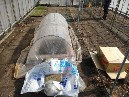 温室内の温床で育ている春野菜の状況です。