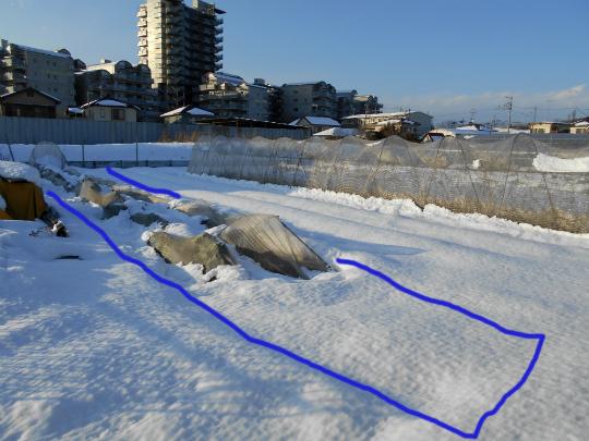 雪で潰れたケールネットの写真です。