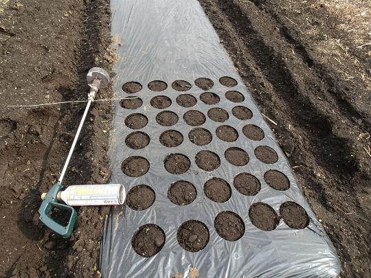 枝豆の播種状況の写真です。