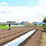 ほうれん草のモヒカンネット栽培(結果報告)